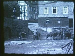Nachdem das Rotvieh durch die Stadt getrieben wurde, erfrischt es sich in einer Furt mitten in Berleburg.