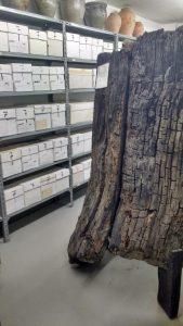 In dem Raum für die archäologische Sammlung befindet sich auch ein Baumbrunnen.