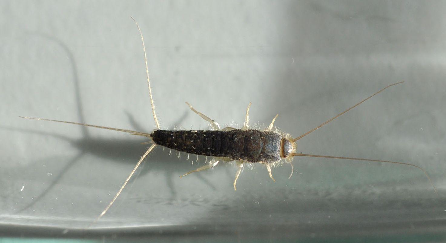 Silberfische Im Schlafzimmer – Caseconrad.com